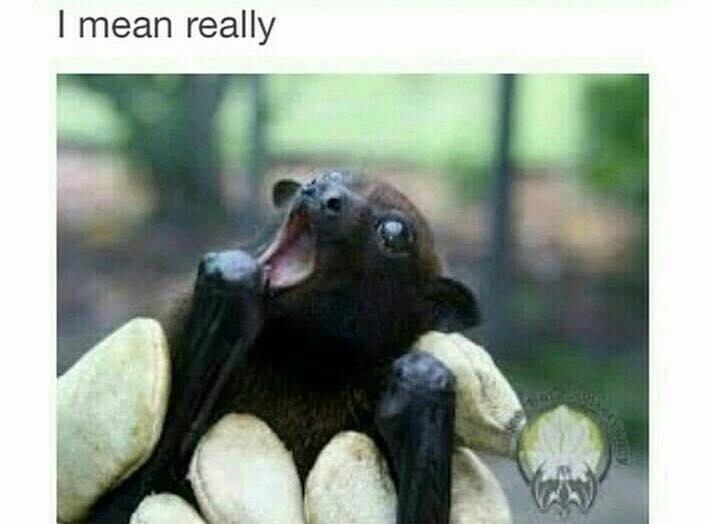 Bats are Amazing