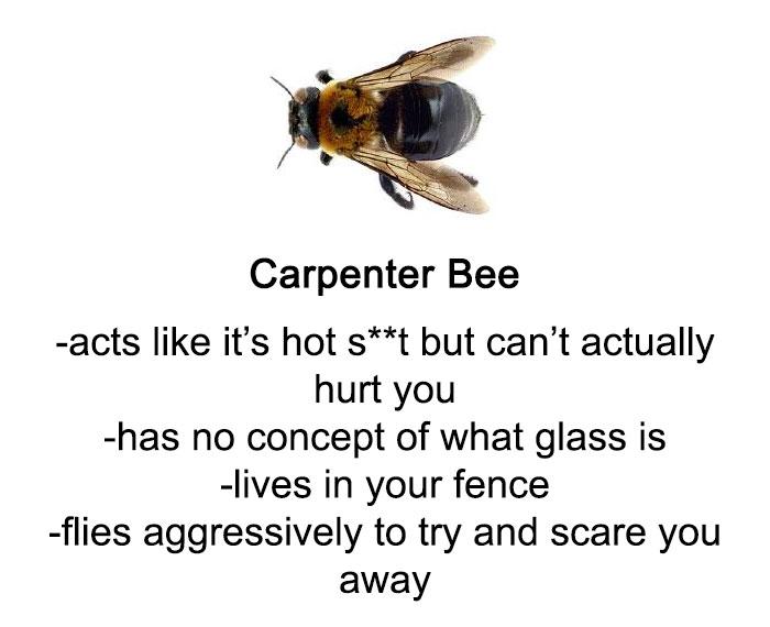 Bees (kottke. Org).