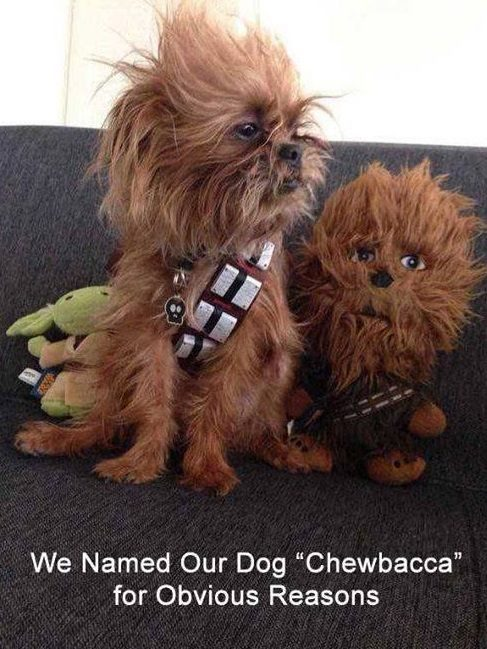 Appropriate Pet Names