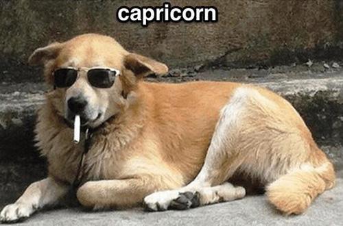 Zodiac Doggos