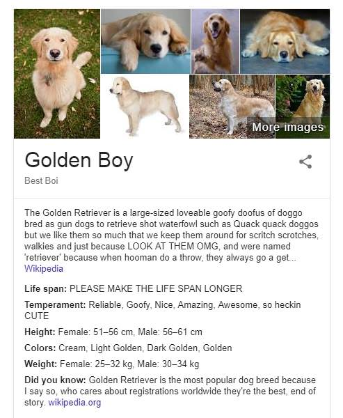 Accurate Doggo Descriptions