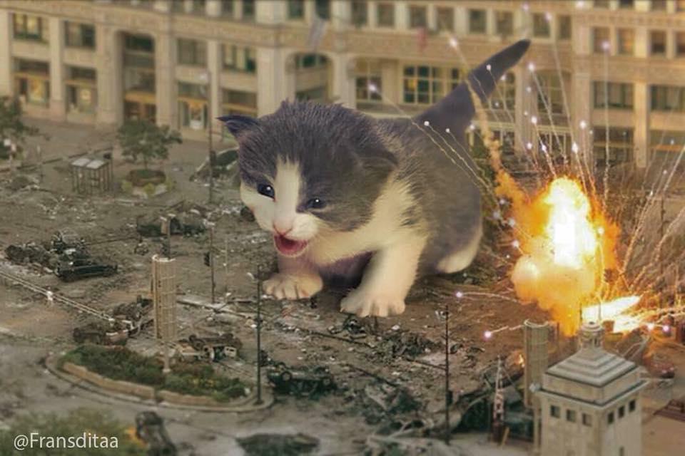 Giant Kitties