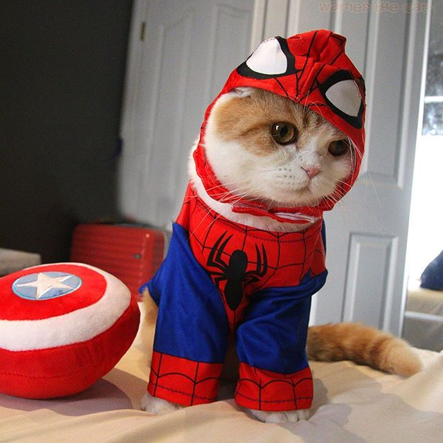 Cat Cosplaying as Marvel Characters