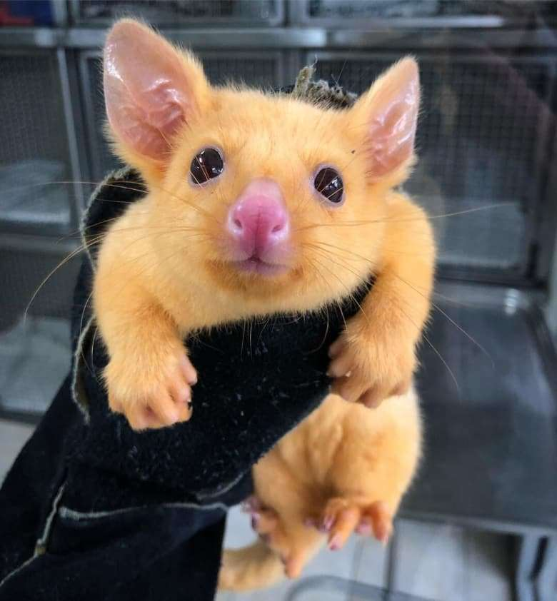 A Real Life Pikachu Exists