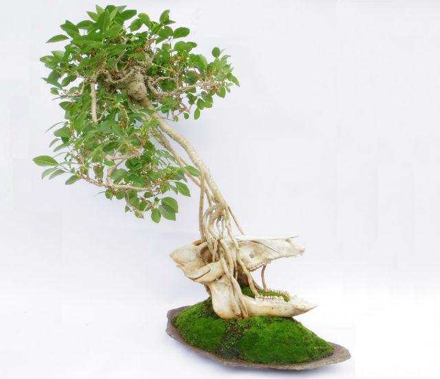 Animal Skull Bonsai Trees