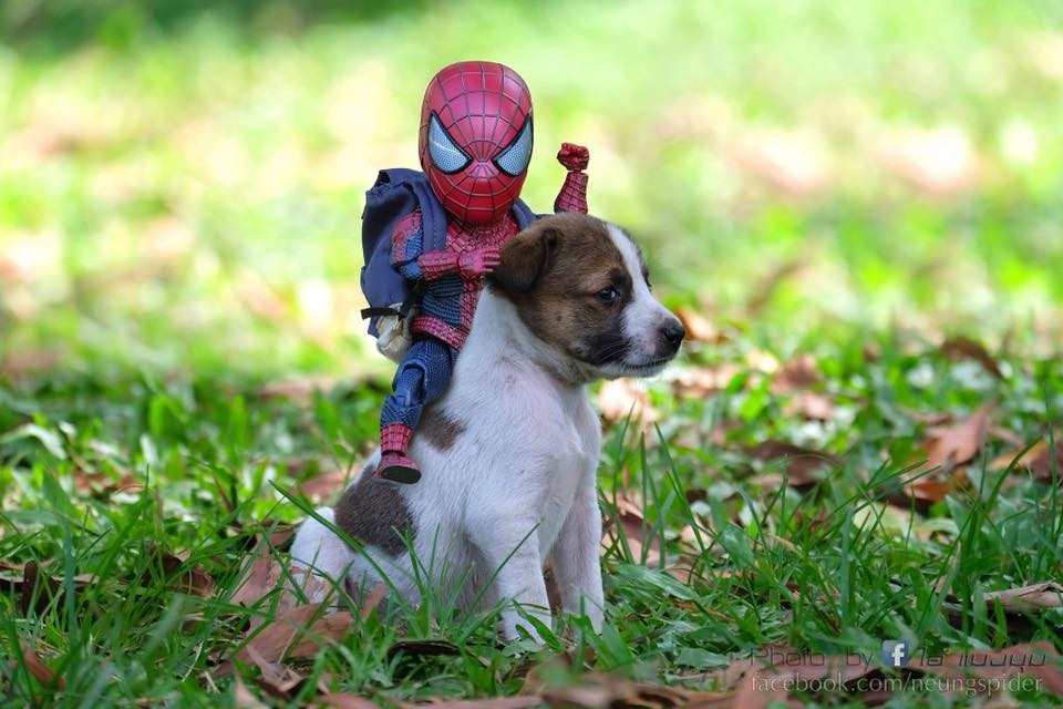 Spider-Man with a Puppy Photoshoot