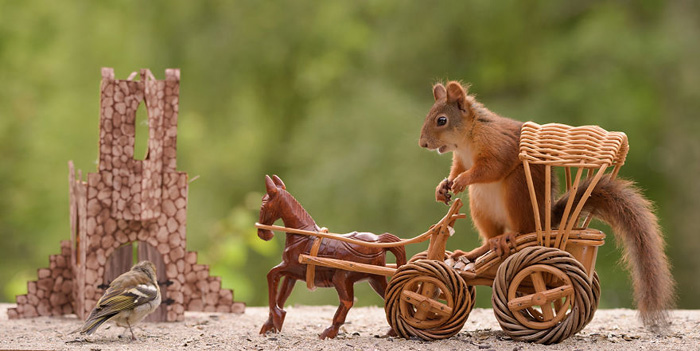 Squirrel Game Of Thrones