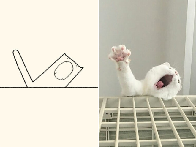 Accurate Cat Drawings