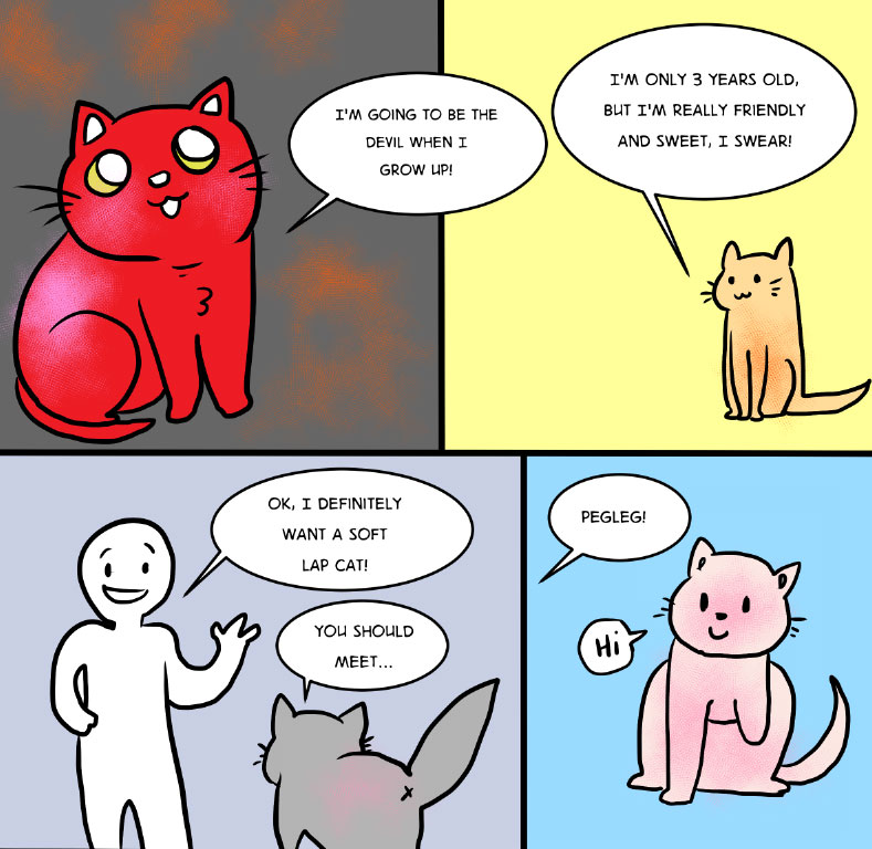Adopting a Cat