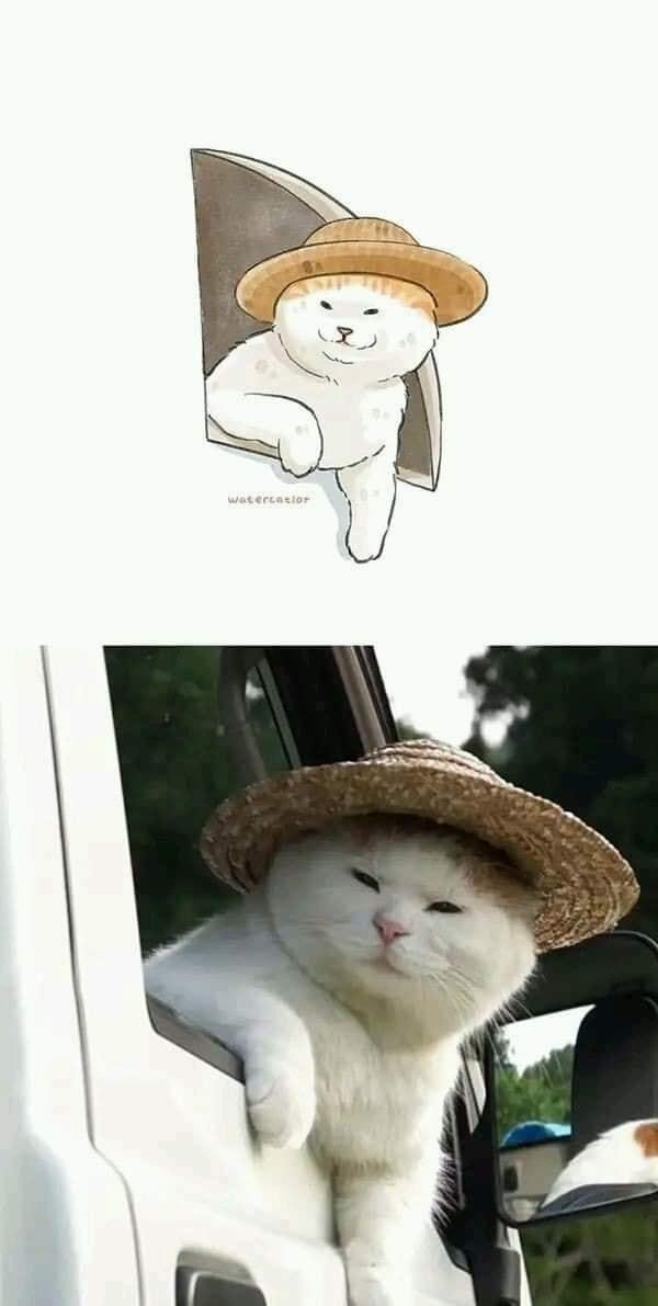 Cat Photo Drawings