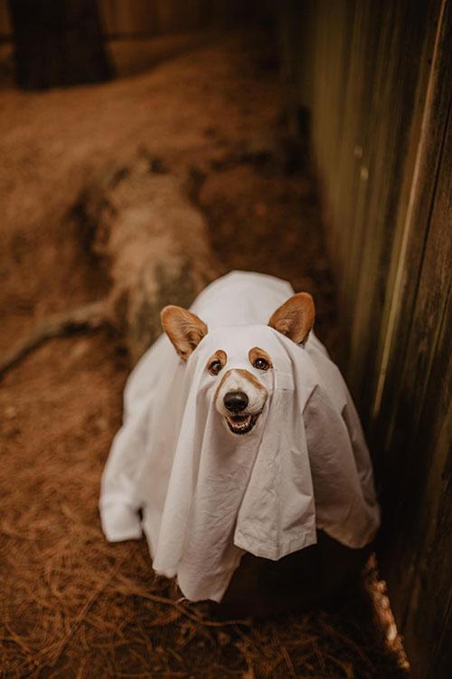 Ghost Dog Halloween Photoshoot