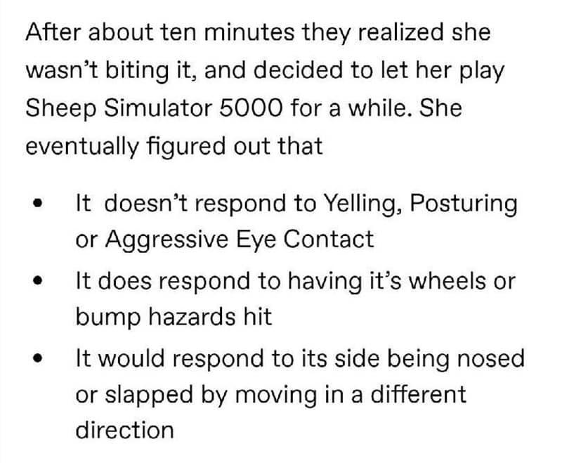 Lawn Roomba vs Arwen the Sheepdog