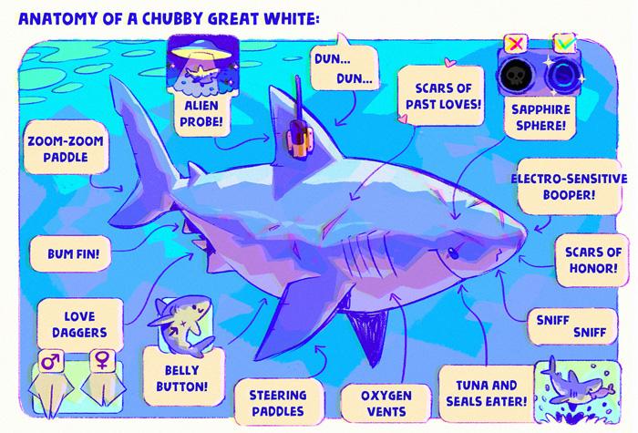 Sweet Sharks Anatomy Art