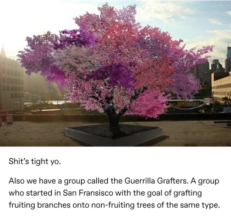 Trees Are Super Weird