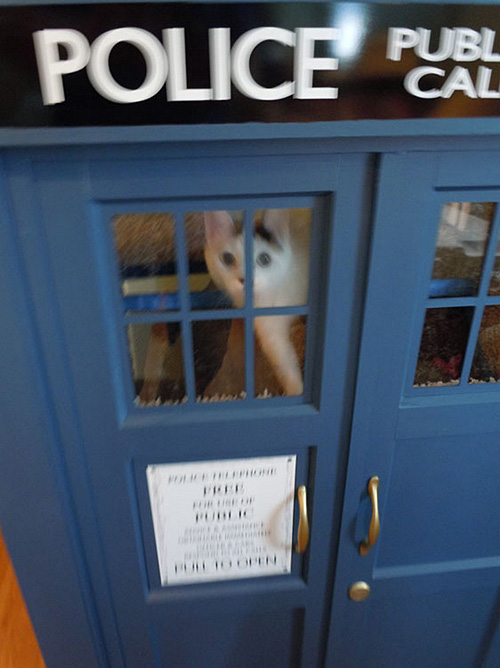 Doctor Who TARDIS Cat Fort