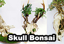 Animal Skull Bonsai Trees