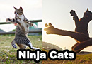 Ninja Cat Photos