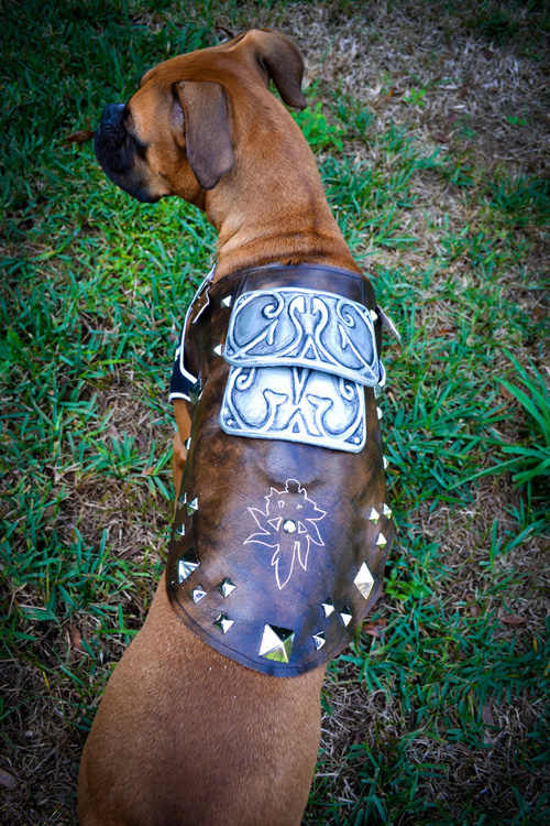 Dragon Age Dog Cosplay on Leather Dog Harness