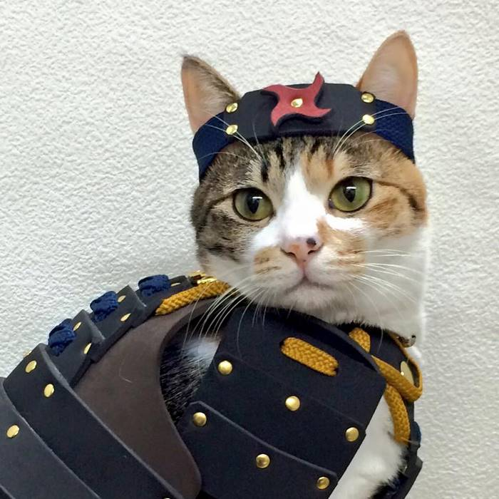 Samurai Armor for Cats and Dogs